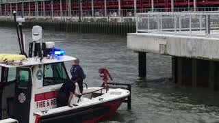 Saving a Deer that Jumped into the Hudson River