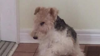 Dog knows how to dab - Video