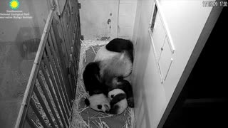 Mama Mei with Hiccups 11/16/20