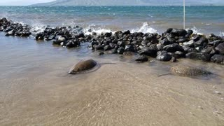 Two Sea Turtles Chilling