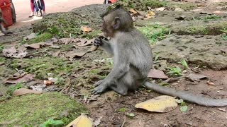 Baby Monkey Need Food - Video