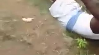 Very Funny Goat take her revenge from Her Owner  - Video