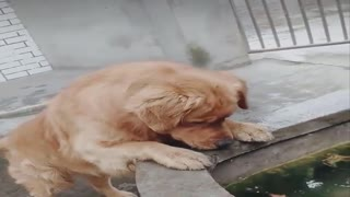 Very beautiful, the dog saves a fish