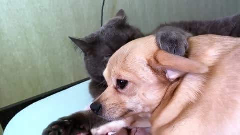 Two friends love each other!