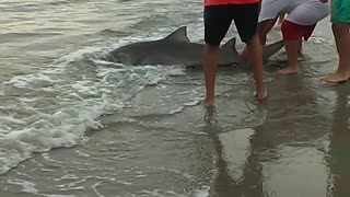 Shark Catch and Release - Video
