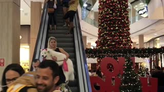 Mall Allows Dogs for a Day