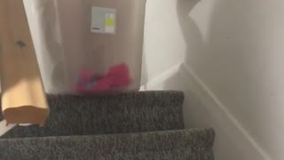 Girl sliding down stairs in plastic box and falls