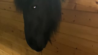 Horse and Doggy Hanging out in a Barn