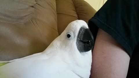 Adorable Onni Cockatoo Reacts to the Tree Service