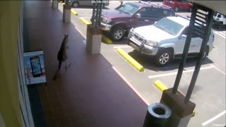 Unusual Customer Hopped By Today - Video