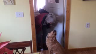 Golden Retriever Refuses To Kiss Older Woman - Video