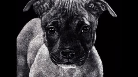 """Mr. Mischief "" - Pit Bull Pup - Scratchboard Drawing"