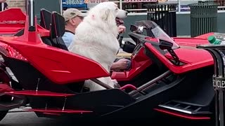 Totally Chill Dog Goes For A Ride In Exotic Super Car