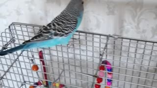 A beautiful parrot flies around the room.