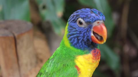 Parrot is happy to sing