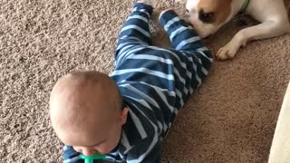 Puppy playing with baby