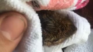 Guy saves chipmunk from toilet bowl - Video