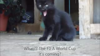 Cat and World Cup Brazil 2014 - Video