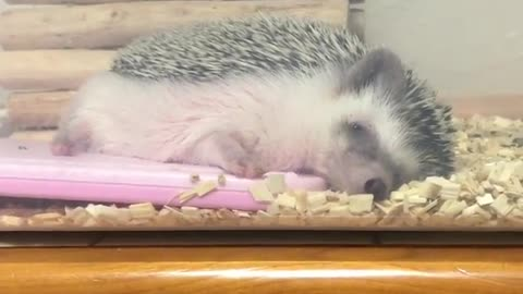 hedgehog is waiting for warms in the house