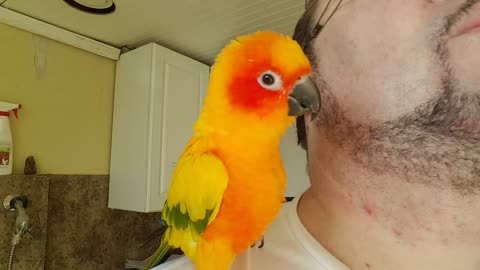 Dancing with a parrot