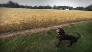 Dog Does Incredible Jumps in Super Slow Mo
