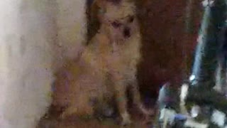 The dog is very much missed by owner!  - Video