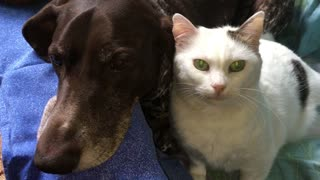 Dog unimpressed with overly affectionate cat