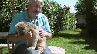 Goodness: Helping Disabled Dogs