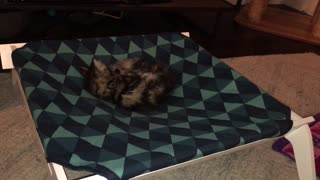 Chrissy discovers her own tail  - Video