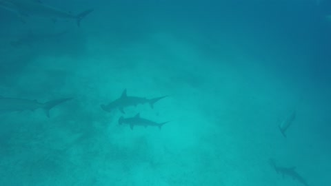 Hungry Hungry Hammerheads - glad we're not a menu item!