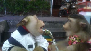 Monkey couple enjoys a romantic night out