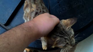 Cat likes petting so much that it feels so good.  - Video
