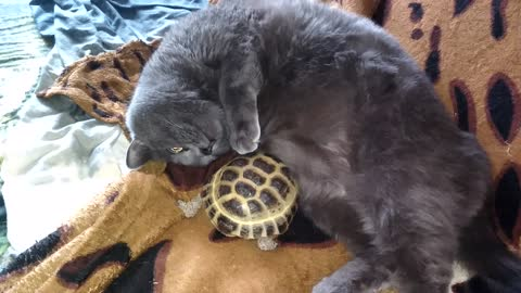 To cat it is good from massage of a turtle.