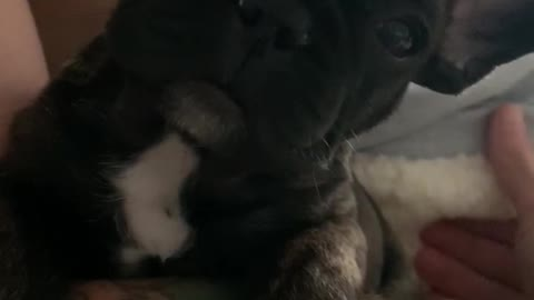 Cute puppy with hiccups
