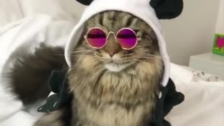 My cat look so awsome like a rock star - Video