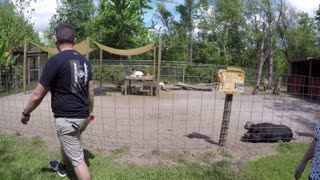 A great day at Amazing Animals in Florida