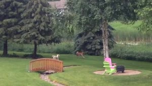 Dog and deer form adorable friendship - Video