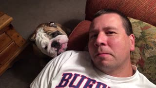 Sleepy Bulldog Wins Battle With Owner - Video