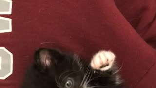 Small black cat being pet
