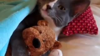 l love cats kettin cute - Video