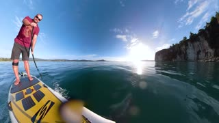 Paddling And Surfing With Dolphins - Video