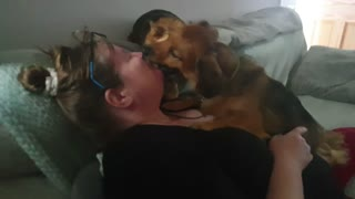 Cute Doggy's show unconditional love