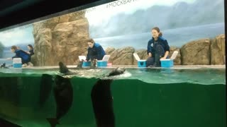 Marine show with trained seals.
