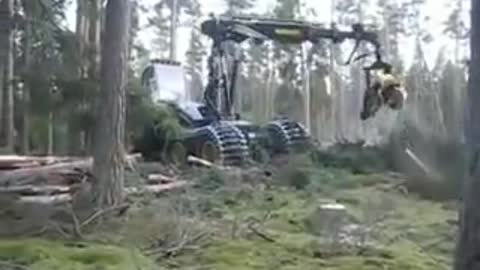 Latest Machine to cut full tree into pieces of equal size in few second