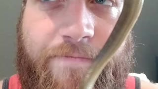 Green snake on guys face goes to camera - Video