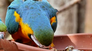 Beautiful parrot and breakfast food