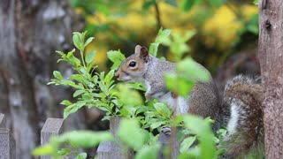beautiful squirrel playing in nature