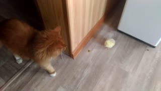 Baby Chick and Kitty at Play