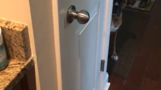 Dog waits while food is made - Video