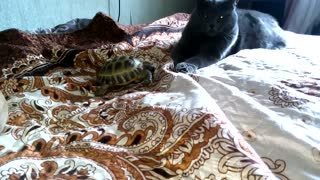 Turtle and cat allies against a dog   - Video